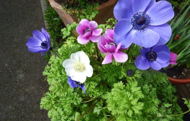 Bible flower